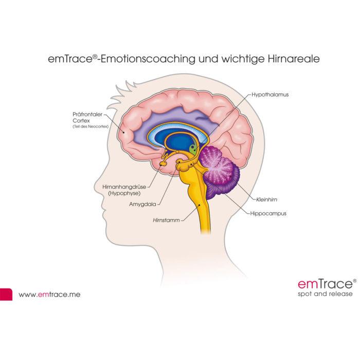 Emotionsmodell und Gehirnareale